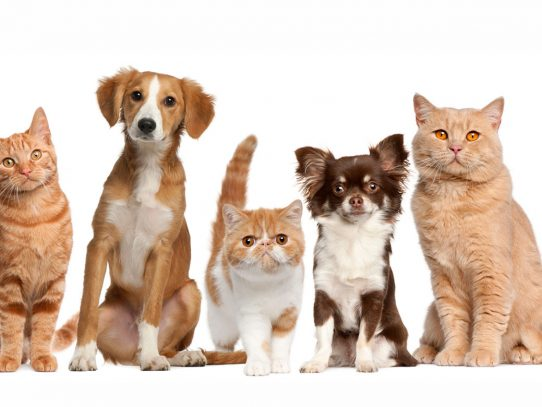 ¿Quieren dar el primer paso? adopten una mascota